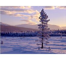 Landscape in winter Photographic Print