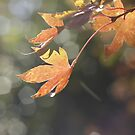 Autumn sunshine by Sangeeta