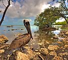 Pelican in the Florida Keys by Bill Wetmore