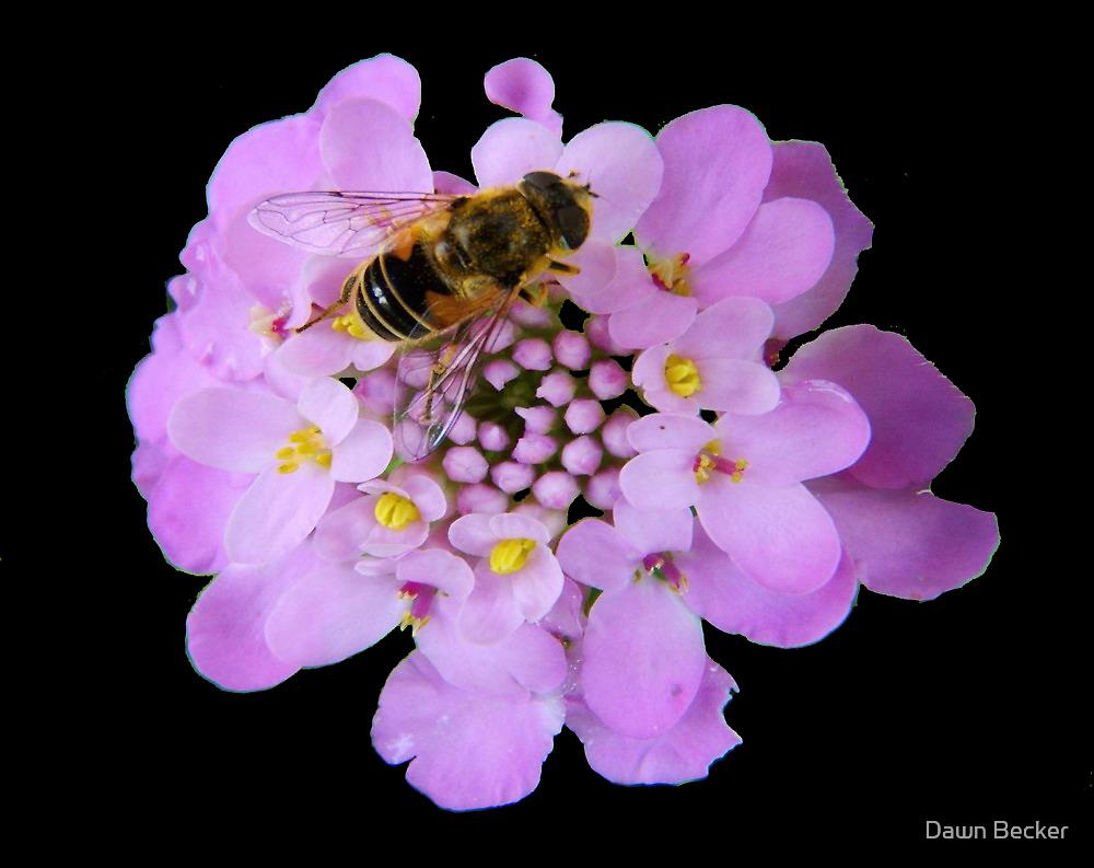 Busy Bee © by Dawn M. Becker