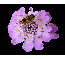 Busy Bee © Photographic Print