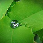 Nature's Diamond by Jan  Tribe