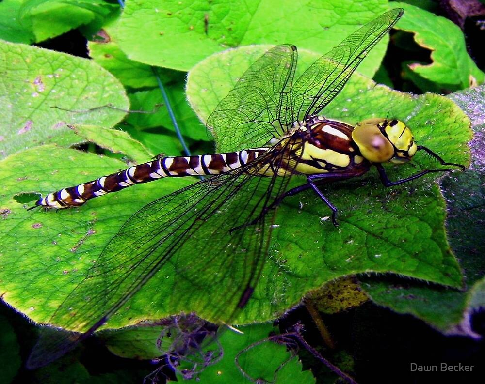 Perfect Landing Dragonfly © by Dawn M. Becker