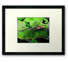 Perfect Landing Dragonfly © Framed Print
