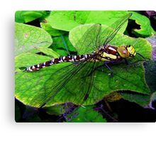 Perfect Landing Dragonfly © Canvas Print