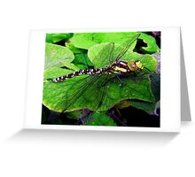 Perfect Landing Dragonfly © Greeting Card