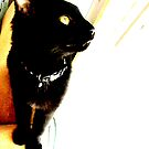 Punkin kitty by CourtneyMichell