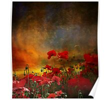 Phil's Poppies Poster