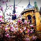 Notre Dame in the Spring by Rachel Meyer