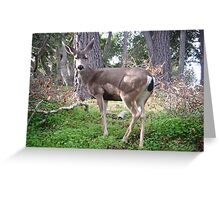 Deer Pose Greeting Card