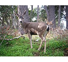 Deer Pose Photographic Print