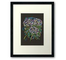 Chrysanthemums 2 Framed Print