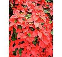Waiting for Christmas! Photographic Print