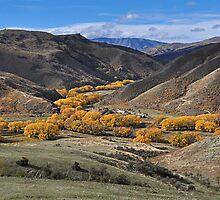 Golden Stream by Peter Hammer