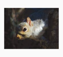 Eastern Gray Squirrel (Sciruus carolinensis) One Piece - Short Sleeve