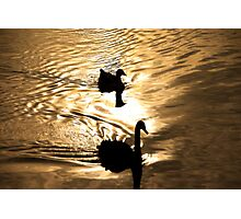 Duck Silhoutte Photographic Print