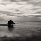 Hear the gulls by athex