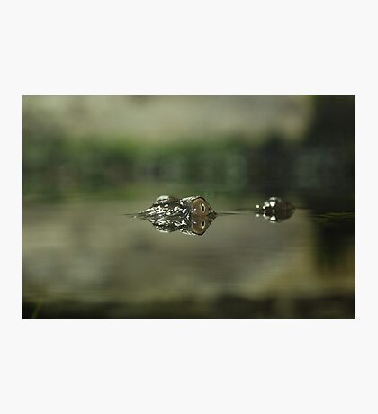 Above the Water Line Photographic Print