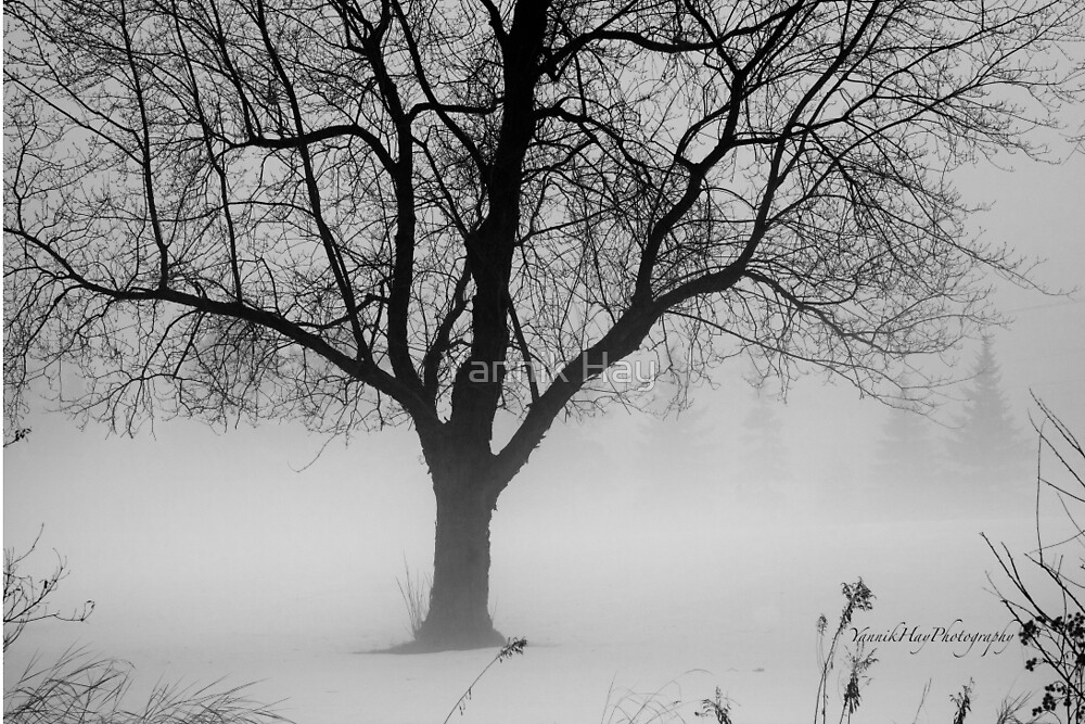 January Foggy Day - Black and White by Yannik Hay