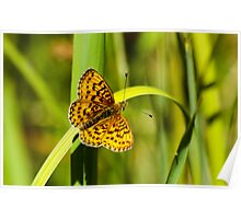 Uncommon Butterfly Poster