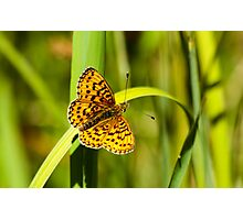 Uncommon Butterfly Photographic Print