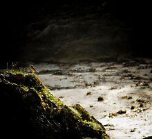 Lonely bird by Chris Leyland