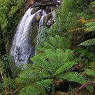 rainforest lushness at Philosopher Falls by gaylene