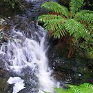 rainforest creek near Philosopher Falls (Tasmania) by gaylene