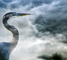 Storm Watcher by Stephen Warren