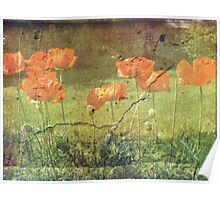 From The Garden.......Poppies Poster