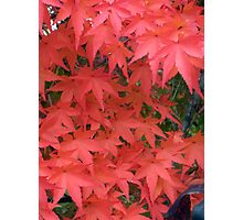 Autumn leaves in South Korea Photographic Print