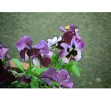 Purple Pansy Pot Photographic Print