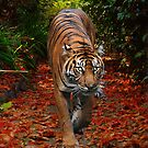 On the Prowl by KeepsakesPhotography Michael Rowley