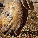 Growing Horns by miroslava