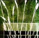 """Green Monotype 1 - Printmaking by Belinda """"BillyLee"""" NYE (Printmaker)"""