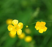 Buttercup Baby by jules572