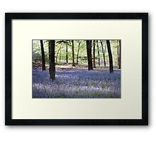 Bluebells, Green Trees - Hampshire Framed Print
