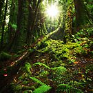 Morning in the Tarkine Rainforest by Mark Shean