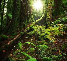 Morning in the Tarkine Rainforest by Mark Shean