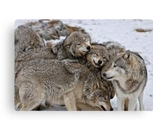 Playful Wolf Pack Canvas Print