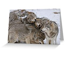 Playful Wolf Pack Greeting Card