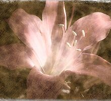 Naked lady lily by Heidi Rand