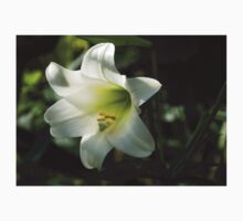 Divine Glow - Illuminated Pure White Easter Lily T-Shirt