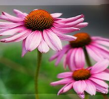 Happy Flowers by susan stone