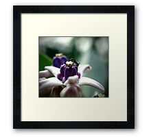Sweet Crown Framed Print