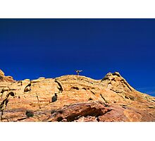 Finding Balance Photographic Print