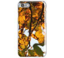 Golden Autumn iPhone Case/Skin