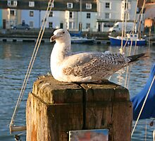Resting seagull. by Mark  Humphreys