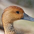 Female Whistling Duck and she says I'm sweating ducks aren't supposed to sweat by Photography by TJ Baccari
