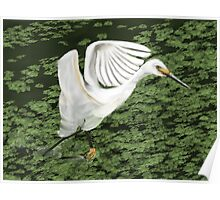 Everglades Bird, Flaired Wings, Running through Water Poster